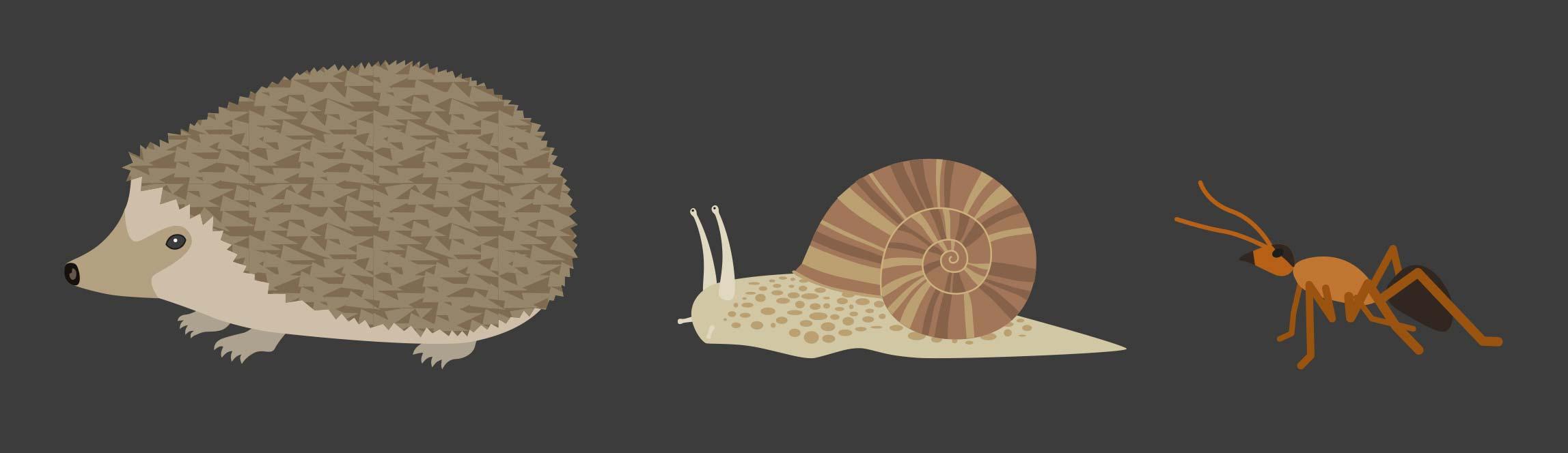 Illustrationen Tiere Signaletik Gurten